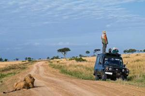 lion_safari